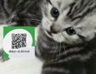 深圳哪里有宠物店 深圳哪里卖宠物猫便宜 深圳虎斑猫价格