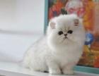 昆明哪里有宠物店 昆明哪里卖宠物猫便宜 昆明金吉拉价格