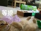 猫咪家庭式寄养服务