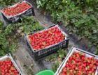 甜蜜的草莓,求带走