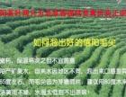 今年新绿茶叶信阳毛尖信阳红直销批发零售价格表
