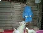 萌萌哒宠物兔好品种