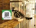 东莞哪里有卖虎斑猫 东莞出售虎斑猫 东莞虎斑猫买卖