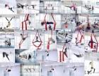 拉萨爵士舞 钢管舞 领舞,道具舞吊环绸缎舞培训学校 盛舞国际