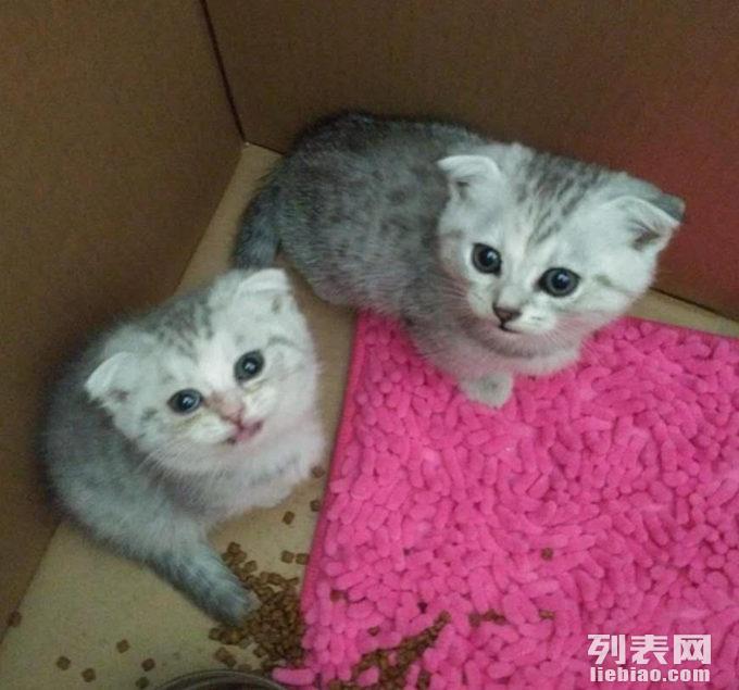 可爱小猫真实照片
