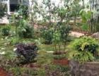 承接各种大小园林绿化工程设计及施工