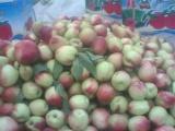 上海陆地油桃销售价格 山东油桃种植基地\今日大棚油桃价格