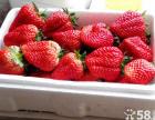 榆关五王庄草莓采摘园