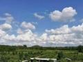 出租恩平周边柠檬种植地3个鱼塘烘干厂房果酱制作厂房