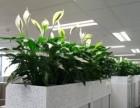 海珠创意园植物出租 海珠植物租赁 海珠区花木销售