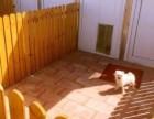 希望家园宠物寄养猫咪狗狗宠物托管十一寄养可接送