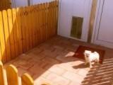 莫奈花园宠物寄养宠物长期托管猫狗十一寄养可接送