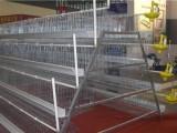 优质鸡笼/蛋鸡笼/阶梯式蛋鸡笼/价格/图片-安平兆东鸡笼厂