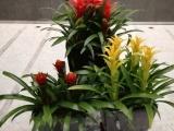 买花卉绿植租赁到大伟花卉,优质产品任您挑选