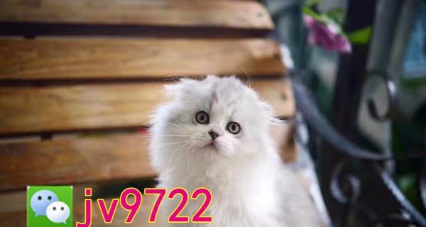 **纯种猫 猫舍直营 签协议死亡包赔 已做疫苗