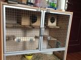 米色龙猫dd加全套家居