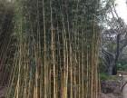 竹片,毛竹,竹梯,竹跳板 竹篱笆