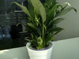 杭州上城花卉綠色植物租擺