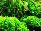 整理鱼缸,水族水草和热带鱼巴西红扇孔雀随便出