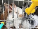 小兔子可爱的小兔子