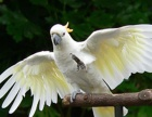 求购小葵花凤头鹦鹉鸟