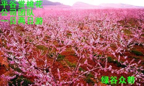 北京平谷桃花节 公司春游踏青 桃花节精选路线