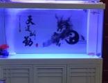 上海鱼缸专卖,鱼缸定制,观赏鱼专卖