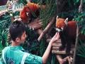 深圳出发 香港2天1晚海洋公园 维多利亚港 休闲游