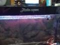 森森品牌鱼缸和锦鲤鱼出售。13889816828