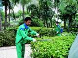 广州绿化养护服务,小区学校单位企业私人订制绿化养护