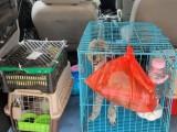 温州发往全国随机各地宠物托运