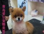 潍坊宠物学校现已开始招生,山东省最早的宠物美容学校