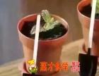创意盆栽奶茶的做法