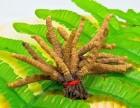 梅州市回收冬虫夏草1克1两1单斤5千根至2千条1公斤价格