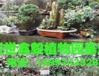 汉阳花市德聚缘花木盆景店盛世鑫毅植物园精美临水式对节白蜡
