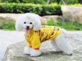 太原出售各类高品质保健康宠物犬