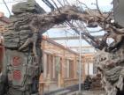 南京仿真树假树、根雕大门制作