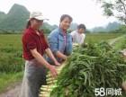 广州番禺蔬菜配送公司 工厂食堂承包 粮油配送 同诚饮食
