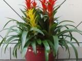 長寧區綠植盆栽辦公室花卉植物租賃植物租擺長寧區室內養護
