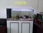 鑫德龙生态鱼缸、水族箱