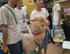上海杨浦区小羊驼出租-小矮马租赁-小香猪转租-生日庆典暖场