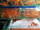 承接鱼池园林水进化处理,各种观赏鱼出售
