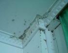 呼和浩特专业除蟑螂 老鼠 蚂蚁