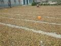 武汉幸福小站 欢乐农家 拥抱大自然