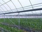 出租兴国现代农业示范园蔬菜大棚