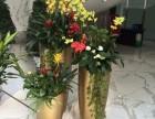 天津花卉租赁公司 天津绿植租赁公司 天津植物租赁公司