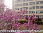安徽绿海商务职业学院就业保障
