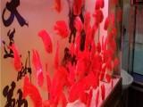 镇江热带鱼专卖