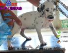 斑点狗多少钱一只/在哪里能买到