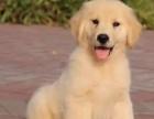 郑州哪里有狗狗卖郑州狗狗多少钱郑州哪里有狗狗领养
